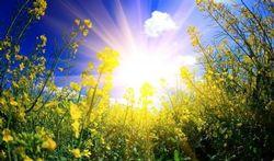 Ce soleil, mais que ça fait du bien !