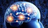 Comment l'exercice physique rajeunit le cerveau