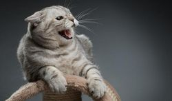Pourquoi un chat peut-il se montrer agressif ?