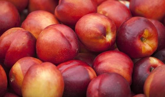 Nectarine le fruit qui donne la p che - Peche a peau lisse ...