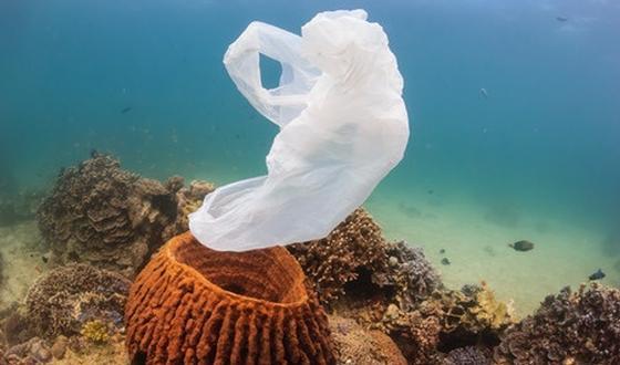 123-p-zee-vervuiling-plastiek-170-9