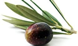 Trop de mauvais cholestérol ? L'olive à la rescousse ! [publi-info]