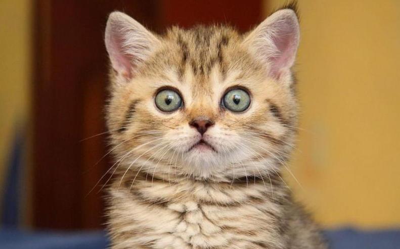 comment apprendre a un chaton la proprete